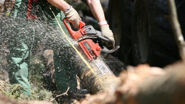 Baumfäller fällt im falschen Wald