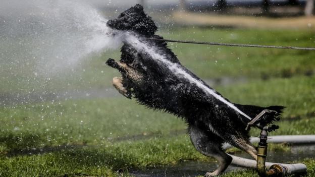 Bewässerungsverbot in Meisterschwanden nützt
