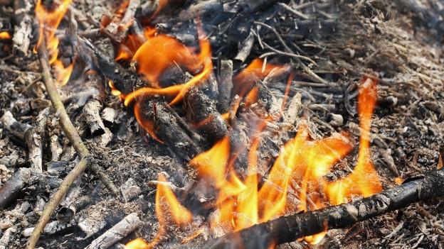 Der Waldbrand sei passiert, weil jemdand unvorsichtig mit einer Feuerstelle umging, sagt die Polizei.