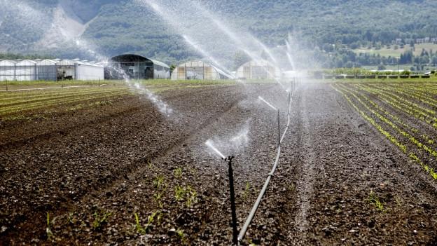 Aargauer Bauern wollen ihre Felder künftig mit Trinkwasser ab Leitung bewässern können.