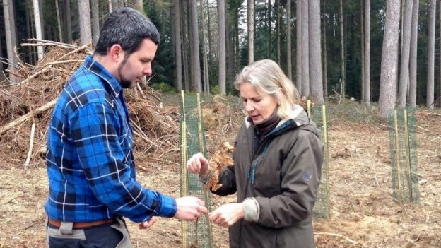 Revierförster Reto Müller und Regierungsrätin Brigitte Wyss pflanzen eine Eiche.