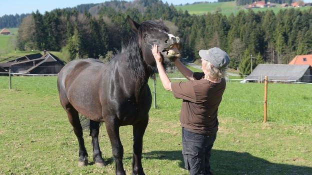 Das «Projekt Alp» will Solothurner Bauern für soziale Dienstleistungen gewinnen
