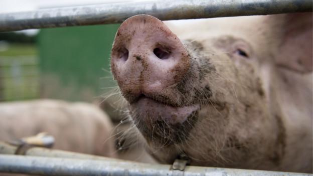 Hat der Kanton Solothurn die Möglichkeit, Tierverlade zu kontrollieren?