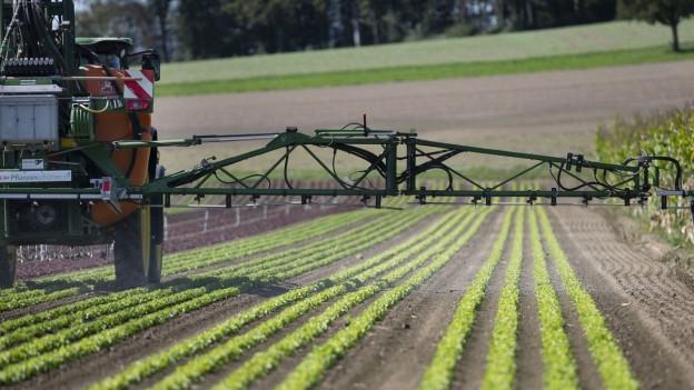 Ein Traktor fährt über ein Gemüsefeld und spritzt ein Pflanzenschutzmittel.