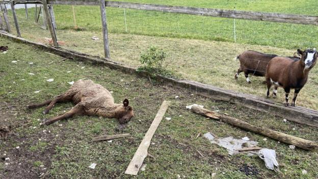 Im Februar wurden in Oftringen tote Tiere entdeckt