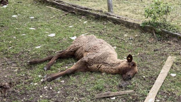 Der Tierschutzfall in Oftringen hat einiges bewegt