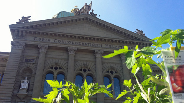 Viel Grün während des Wildpflanzenmärits vor dem Bundeshaus.