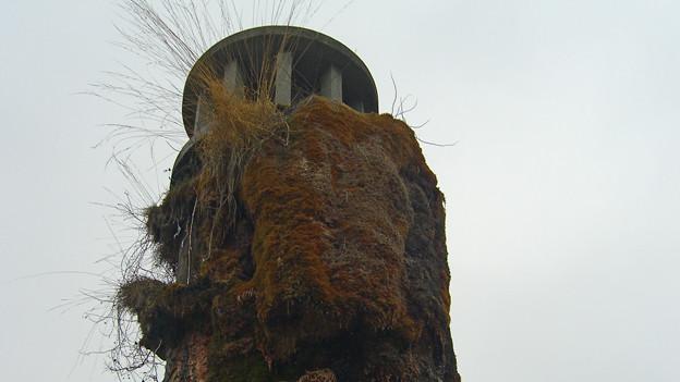 Der Brunnen wurde 30 Jahre lang der Natur überlassen.