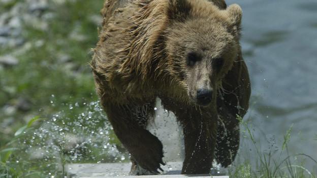 Berna vor einem Jahr im Bärenpark.