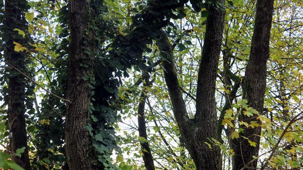 Der Wald im Kanton Bern ist zu alt.