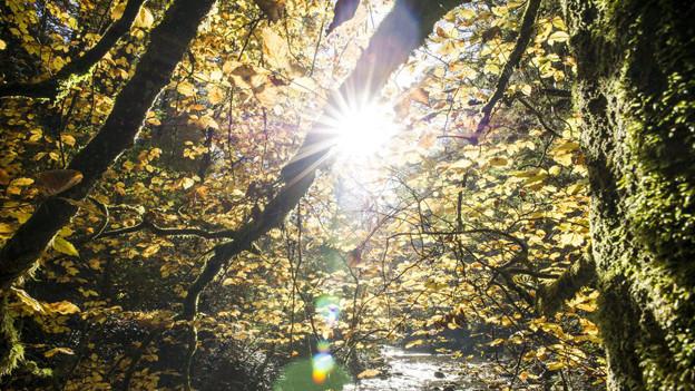 Der Wald soll wieder jünger werden.