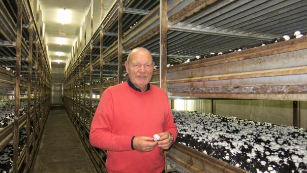 Hans-Ulrich Gerber von der Firma Gerber Champignons: «Pro Jahr produzieren wir 1200 Tonnen Champignons.»