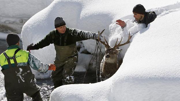 Das Berner Jagdinspektorat wird neu organisiert.