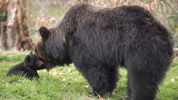 Mutter Mascha und eines der Kleinen im Berner Tierpark.