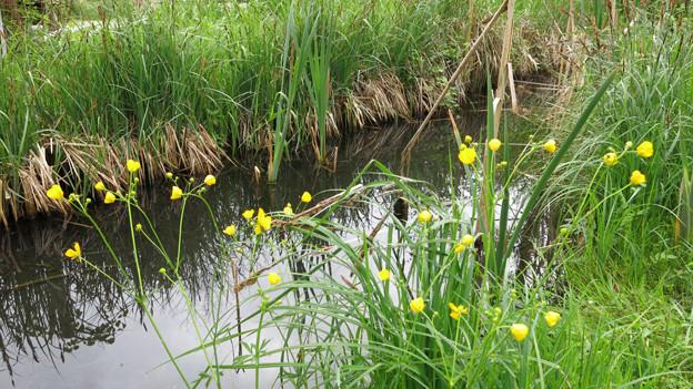 In Wassernähe gedeiht viel Leben, wie hier auf dem Areal des Infozentrums Eichholz.