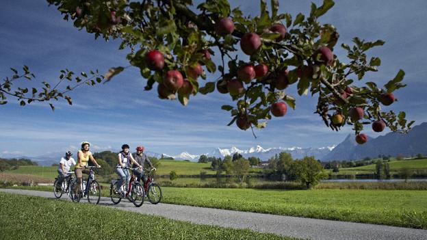 Velofahrer unterwegs im Naturpark Gantrisch.