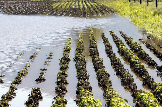 Der nasse Juli hinterlässt wieder temporäre Seen.