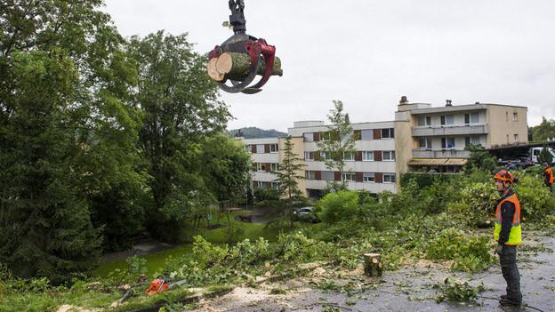 Zahlreiche Bäume mussten bereits gefällt werden.