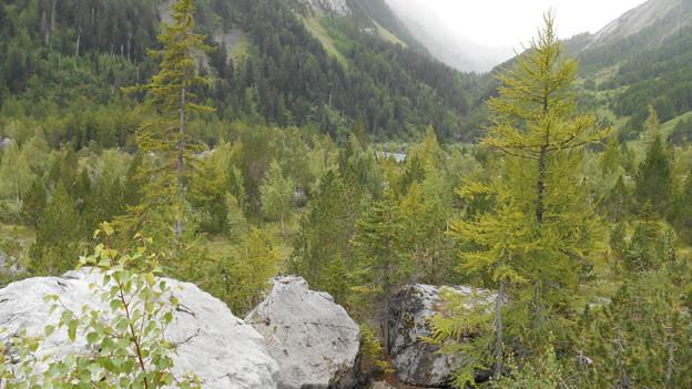 Der Felssturz schuf einen See (in der Mitte), links an der steilen Felswand wächst ein Urwald.