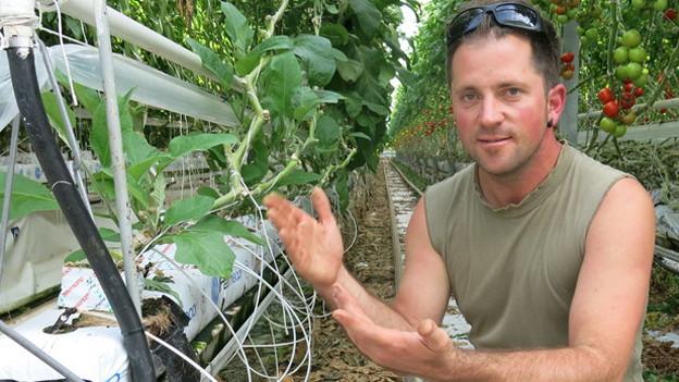Pascal Gutknecht erklärt, wie Hors-Sol-Gemüse angebaut wird.