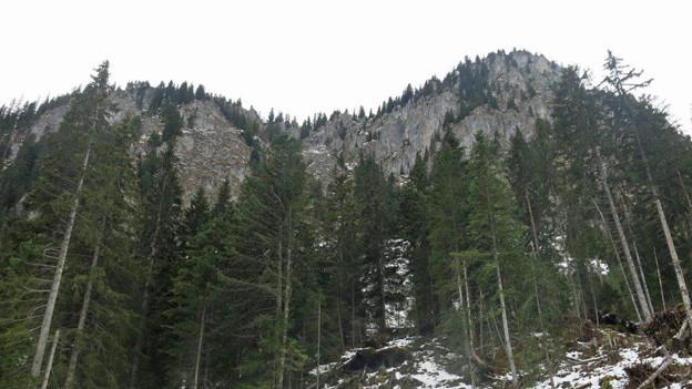 In den Wäldern rund um die Gastlosen werden Bäume gefällt.