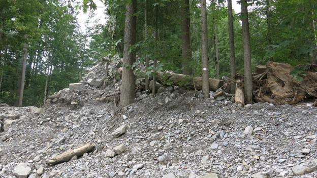Das Unwetter hat Böden ausgewaschen und Schutzwald beschädigt.
