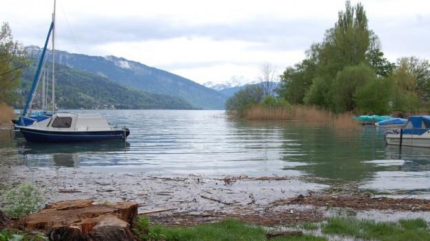 Der Thunersee ist randvoll. Auch am Ufer bei Gwatt hat es viel Schwemmholz.