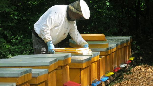 Der Schutz der Bienen soll im bernischen Landwirtschaftsgesetz ausgebaut werden