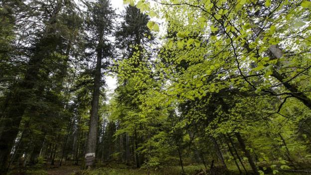 Die Waldnutzung soll wirtschaftlicher werden.