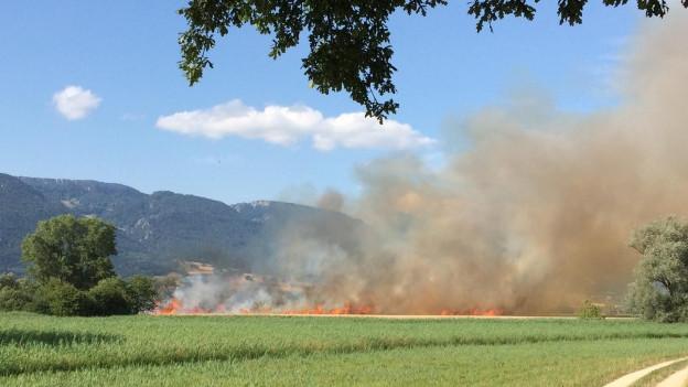 Am Montag ist im bernischen Lenganu ein Weizenfeld in Brand geraten.