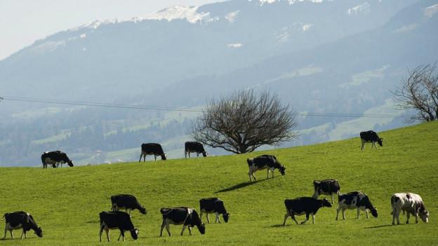 Auch künftige Generationen sollen sich im Kanton Freiburg draussen erholen können. Im Bild: Kühe in Bulle.