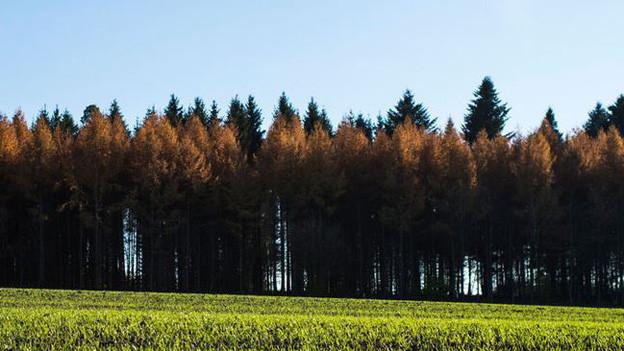 Der Berner Wald ist besser erforscht.