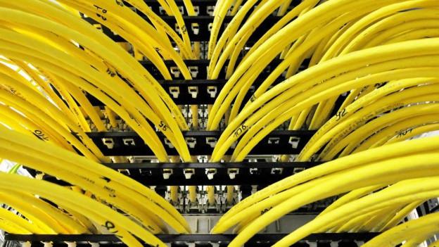 Die Uni Bern hilft dabei, im Netzwerkdschungel den Durchblick zu behalten.