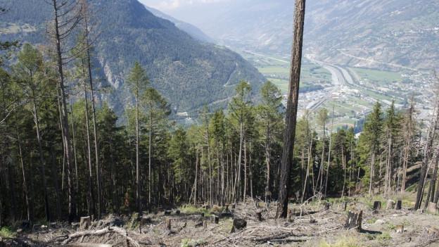 Waldbrände wie 2012 in Visp könnten mit dem Klimawandel zunehmen.
