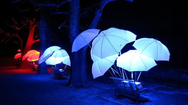 Murten lässt das Lichtfestival strahlen.