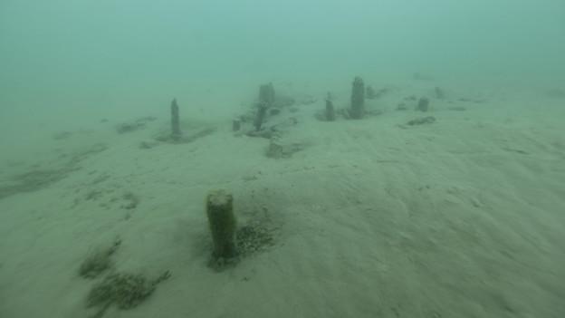 Pfähle der spätbronzezeitlichen Seeufersiedlung im Thunersee.