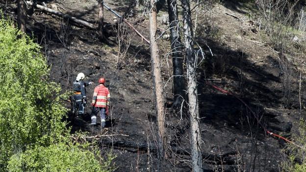 Feuerwehrmänner am Hang im Waldbrandgebiet bei Ried-Brig 2014.