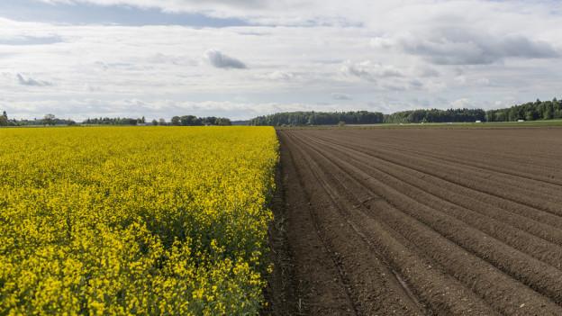 Allzu viel ist ungesund. Eine intensive Landwirtschaft setzt den Böden zu.