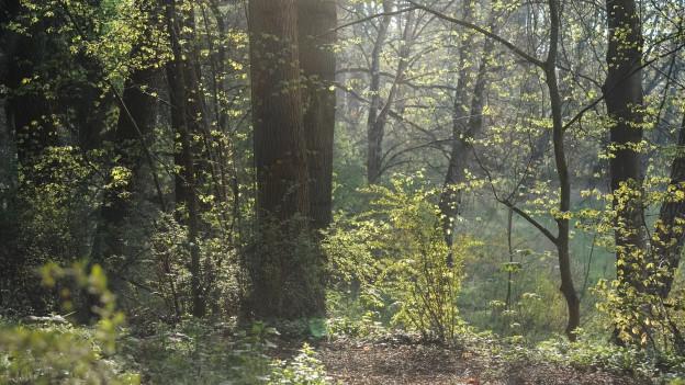In einem Totalwald-Reservat sollen Pflanzen wild wachsen können.