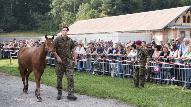 Mann führt Pferd, viel Publikum im Hintergrund