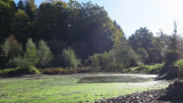 Der Aeschweiher wird immer im Herbst abgefischt und hat danach nur wenig Wasser.
