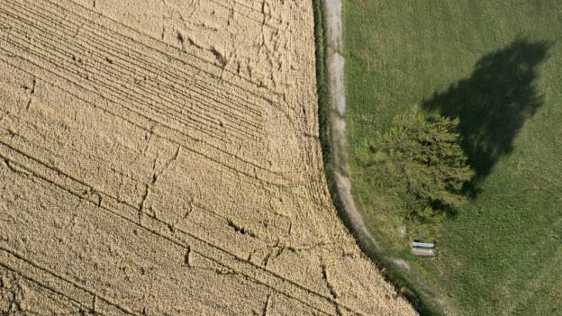 Der Kanton Bern braucht mehr Ackerfläche.