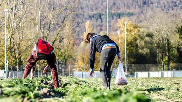 Zwei Freiwillige füllen sich die Taschen: «Wir verteilen das Gemüse auch an unsere Kollegen.»
