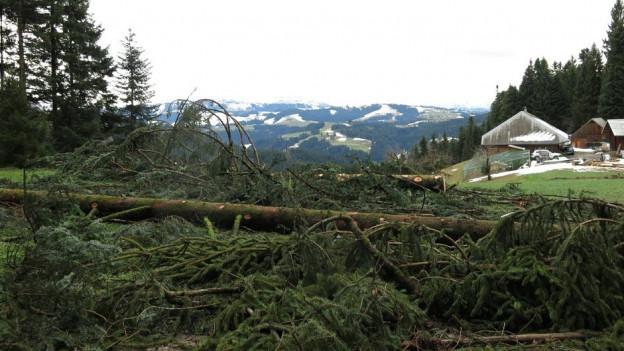 Auch bei Eggiwil im Emmental fällte der Sturm viele Bäume.
