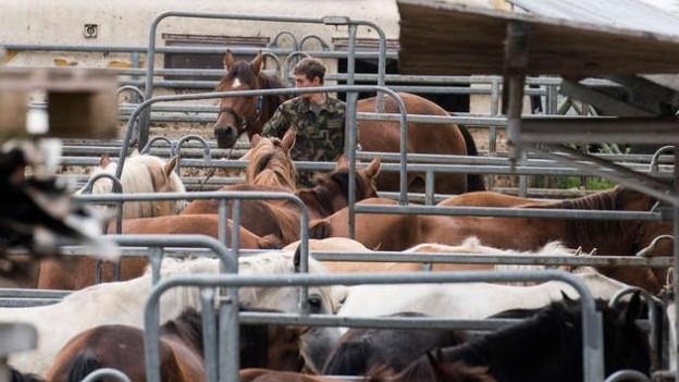 Das Militär sichert Pferde vom Hof Hefenhofen. Der Fall von mutmasslicher Tierquälerei hatte im August für Aufsehen gesorgt.