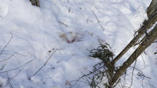 Boden, mit Schnee bedeckt, einige Spuren