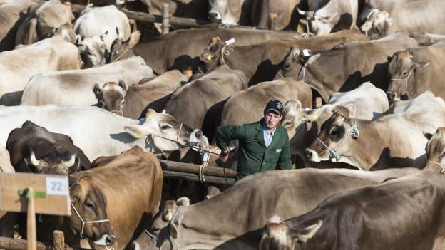Auf den Viehmärkten erhalten die Bauern kaum mehr Geld für ihre Kühe.