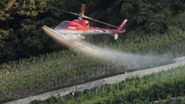 Die Bauern sollen vermehrt auf biologische Mittel setzten – wie hier bei Siders, wo eine biologische Lösung gegen Pilzbefall gespritzt wird.