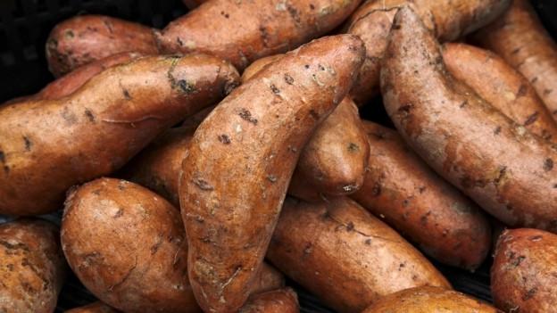Seeländer Landwirte setzen auf Süsskartoffeln.