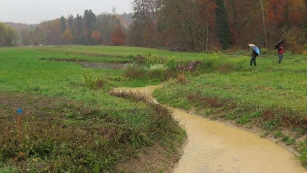 Wasserlauf auf der Biberaue Ferenbalm